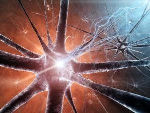 В США ученые успешно протестировали искусственный нерв