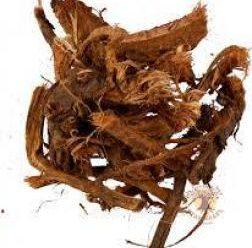 Красный корень: чудо растение и его польза для женщин, мужчин